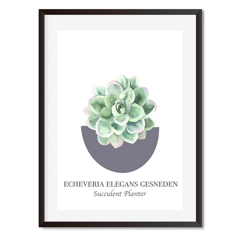 Vintage Named Succulent 2 Wall Art Print
