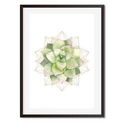 Succulent Planter 6 Wall Art Print