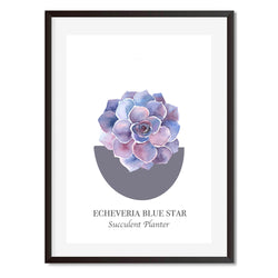Vintage Named Succulent 3 Wall Art Print
