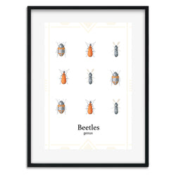 Beetles Wall Art Print - Mode Prints
