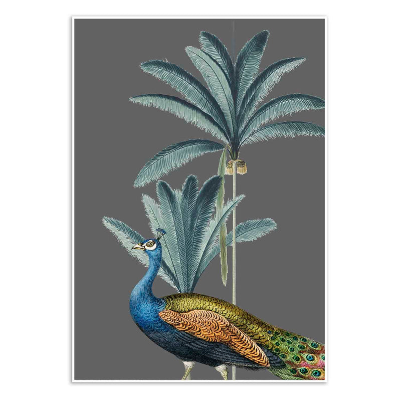 Tropical Jungle Peacock Grey Wall Art Print