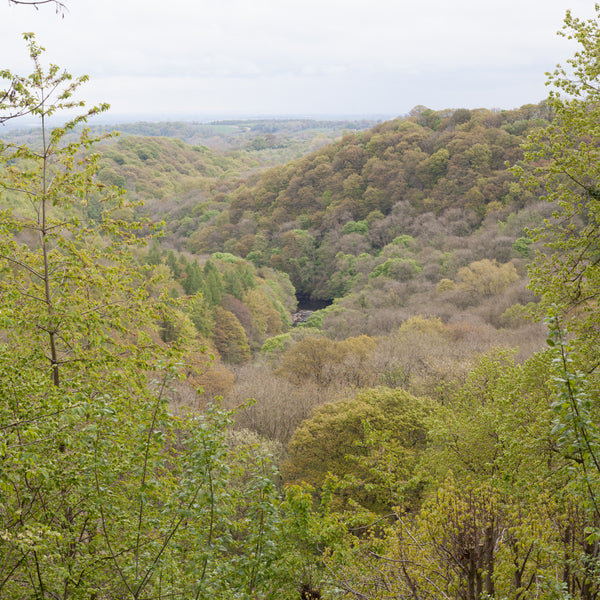 hackfall woods and river Ure