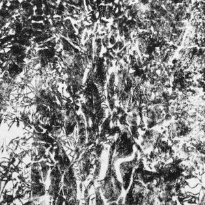 Drypoint Print Grizedale Oak Tree with Ivy