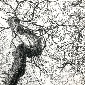 Drypoint Print Grizedale Oak Woodland