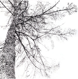 Drypoint Print Larch Tree Grizedale