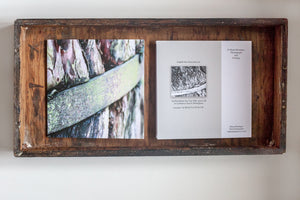 Greetings cards photo of Ancient 900 year old yew tree