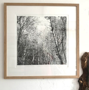 Drypoint Print Grizedale Woodland