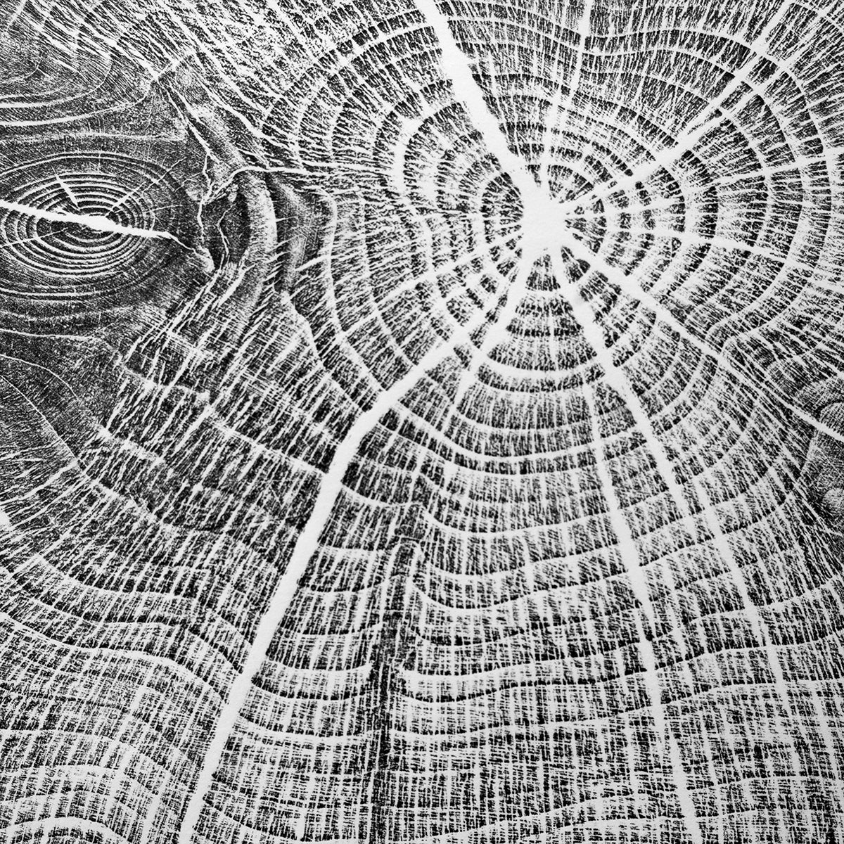 Original Print of Cumbrian Yew 1932-2018 Round 1 in Black Ink