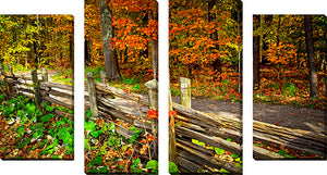 Large Canvas Wall Art Set of 4 by Elena Elisseeva Fall Forest 2,Sets of 4,Lanscapes,orange art,Elena Elisseeva