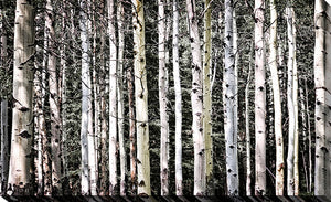 "Giclee Stretched Canvas Wall Art by Elena Elisseeva ""Rockies 4"", All Canvas Art,All Subjects,Landscapes,All Colors,All Shapes,All Artists,black & white art,Landscape Shape,Elena Elisseeva"