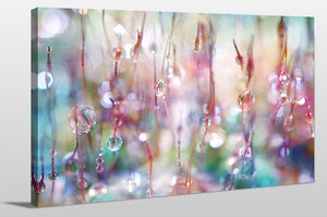 "Giclee Stretched Canvas Wall Art by Sharon Johnstone ""Rainbow Rain Catcher"", All Canavs Art,Floral,All Colors,All Shapes,All Artists,multi-color art,Landscape Shape,Sharon Johnstone"