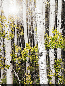 "Wall Art by Elena Elisseeva ""Aspens 3"", All Canvas Art,All Subjects,Landscapes,All Colors,All Shapes,All Artists,white art,Portrait Shape,Elena Elisseeva"
