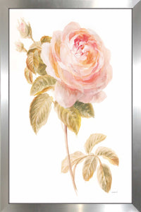 Garden Rose on White Print on Acrylic Floral,White art,Portrait Shape,All Acrylic Art,Danhui Nai,All Subjects,All Colors,All Shapes,All Artists