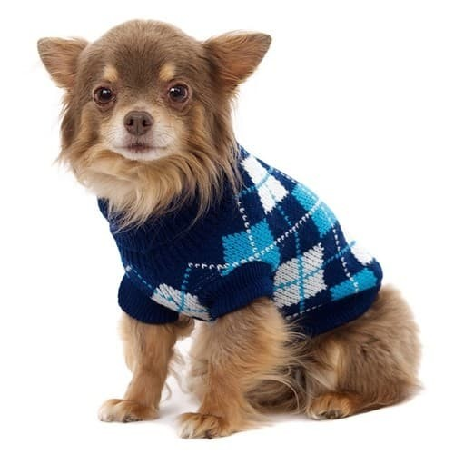 Fashion For Boy Dogs