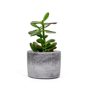 Medium Dark Concrete Round Pot