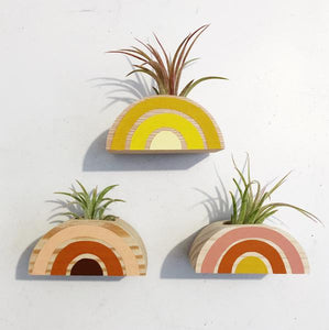 Rainbow Air Plant Magnet