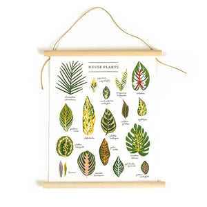 "House Plants Illustrated 11"" x 14"" Canvas Banner Art"