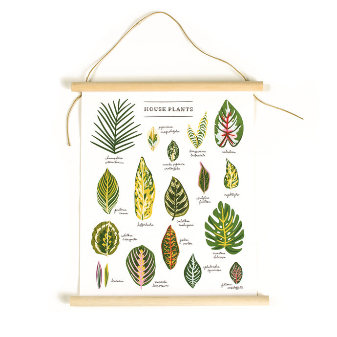 House Plants Illustrated 11