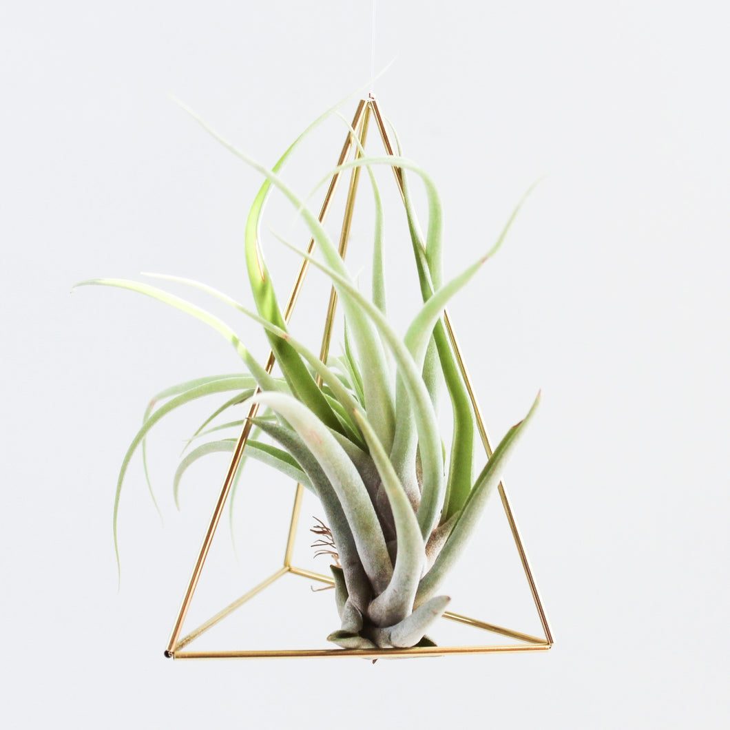 Himmeli Tabletop Triangle Airplant Holder