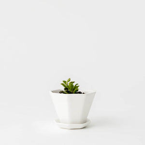 Off-White Ceramic Mini Octagon Planter with Plate