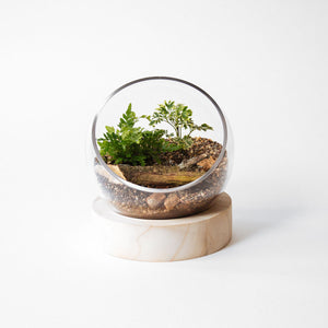 Wed, January 22nd - Build a Terrarium with Plant Shop