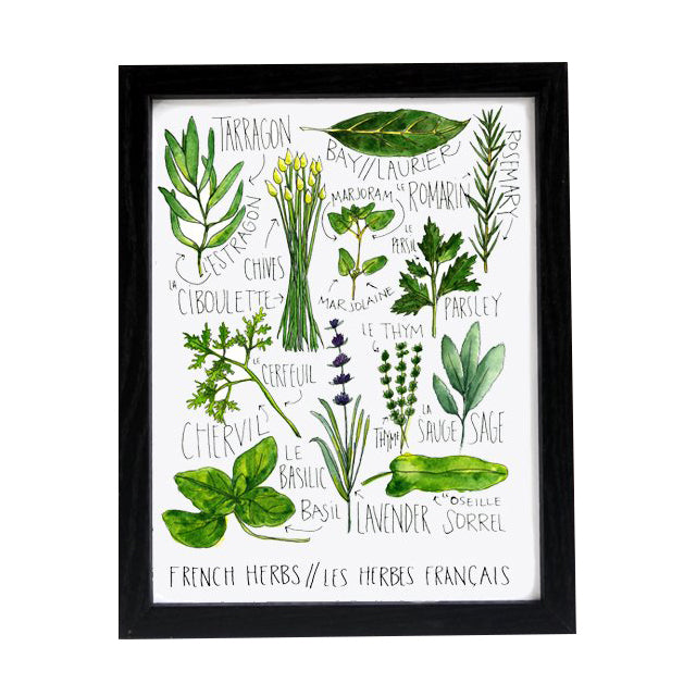French Herbs Chart 8.5