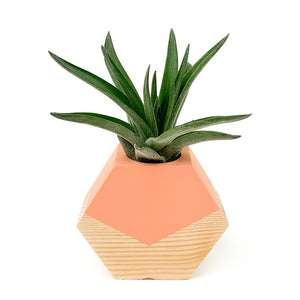 Hexagon Air Plant Holder