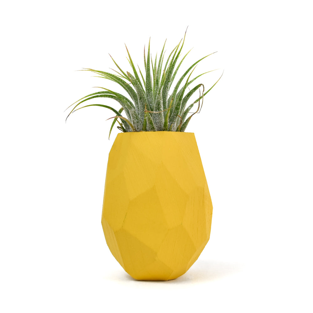 Pineapple Magnetic Air Plant Holder