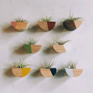 Half Circle Air Plant Magnet