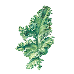 Kale Temporary Tattoo