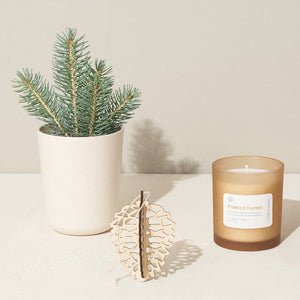 Gather Holiday Spruce Grow & Gift Set