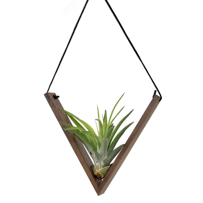 Reclaimed Wood Hanging V Air Plant Holder
