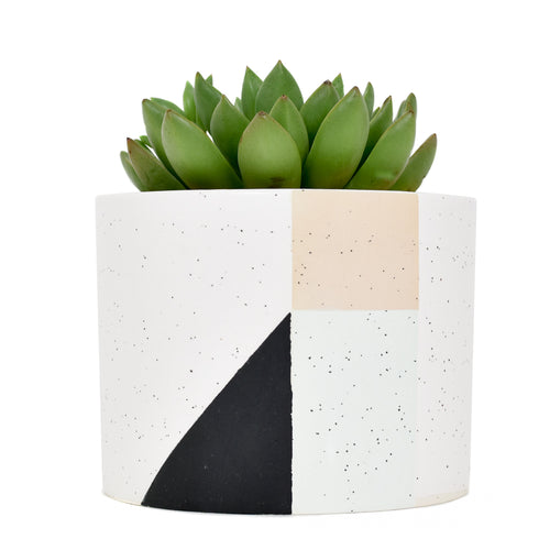 Color Block Ceramic Planter