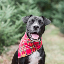 Tartan Plaid Flannel Holiday Dog Bandana