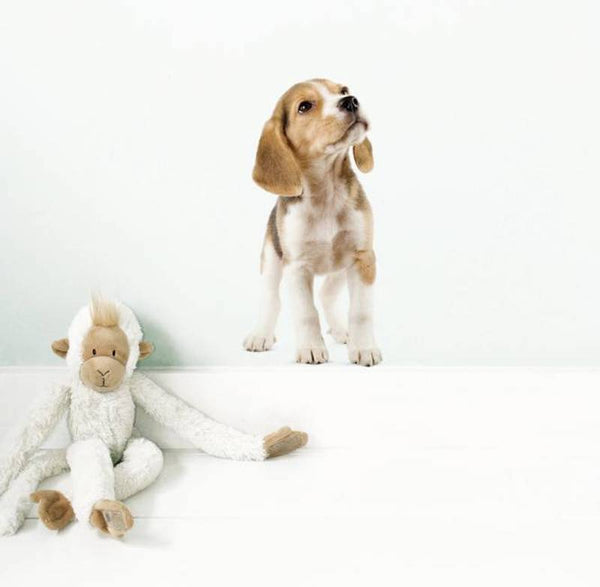 Wall Sticker - Beagle Puppy