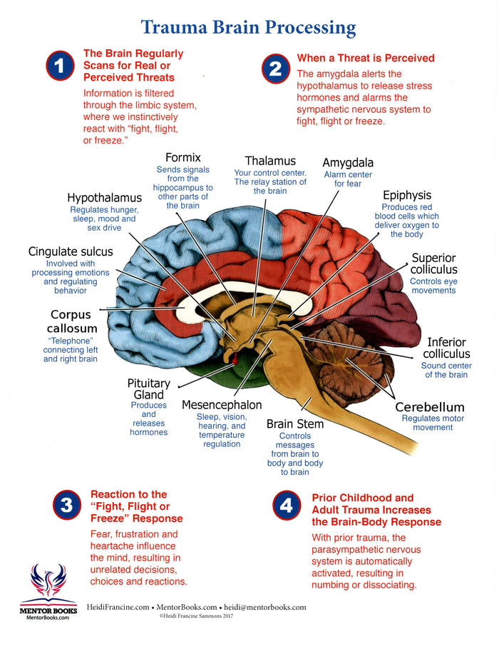 Brain Trauma Processing Chart: How the Brain