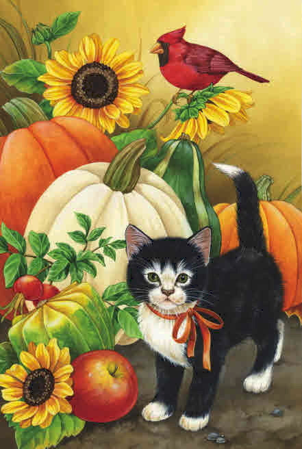 GOURDS AND KITTEN