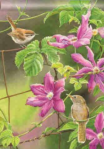 WREN WITH PURPLE CLEMATIS