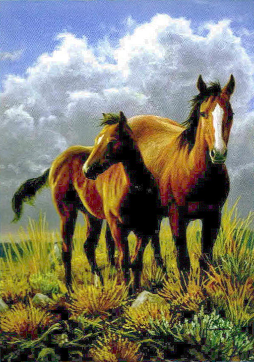 HIGH PLAINS HORSES