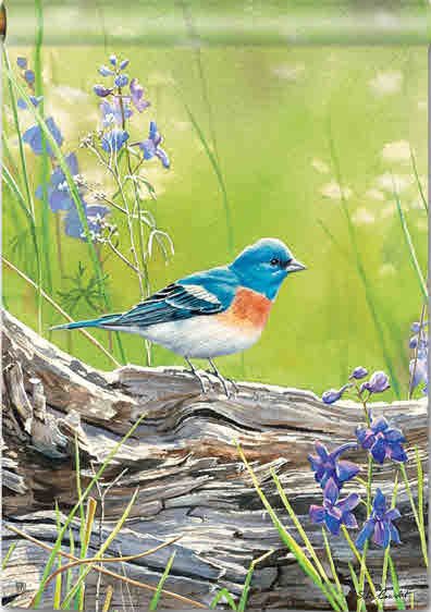 MEADOW BLUEBIRD