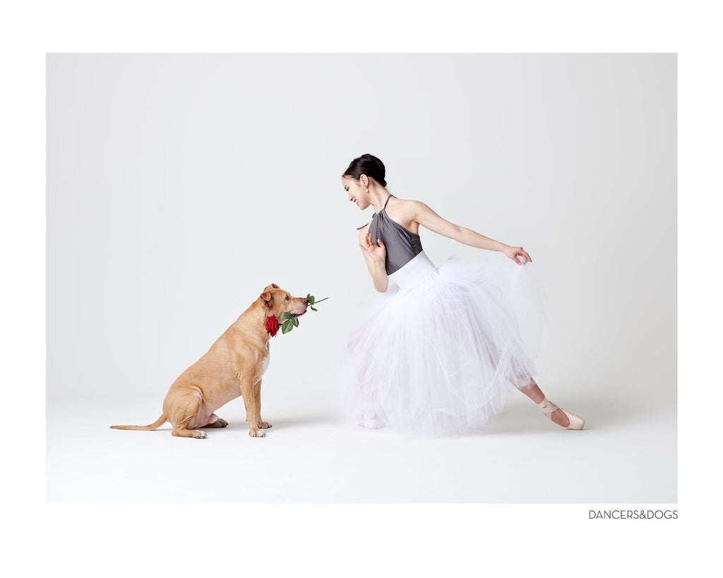 What do Ballet and Pitbulls have in Common