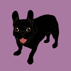 Say hello to the cute all black brindle French Bulldog puppy