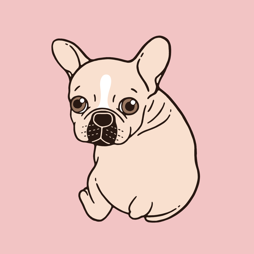 Cute cream Frenchie needs some love