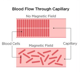 blood cells and magnetic field