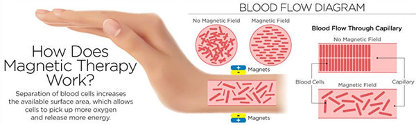 blood cells and magnetism