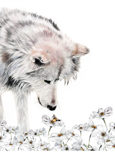 Wolf & Blooms