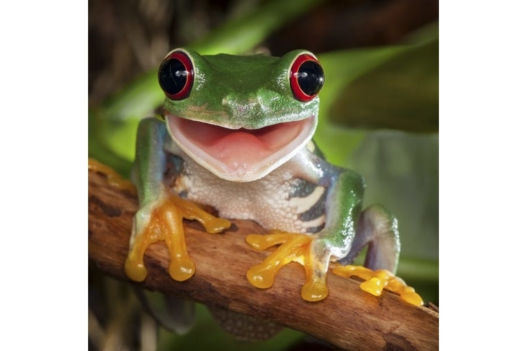 Happy Tree Frog Small Zen Art Puzzle