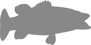 Bass Eating