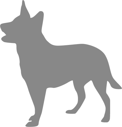 German Shepherd Looking