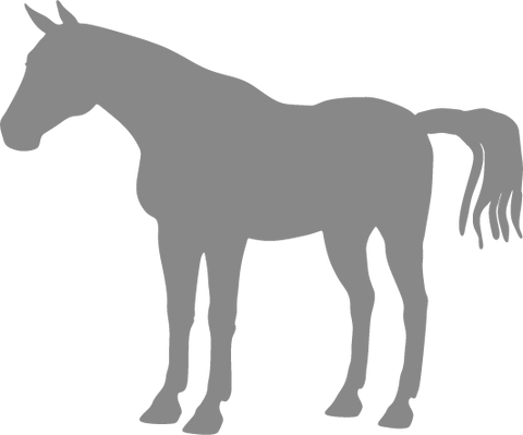 Horse Standing